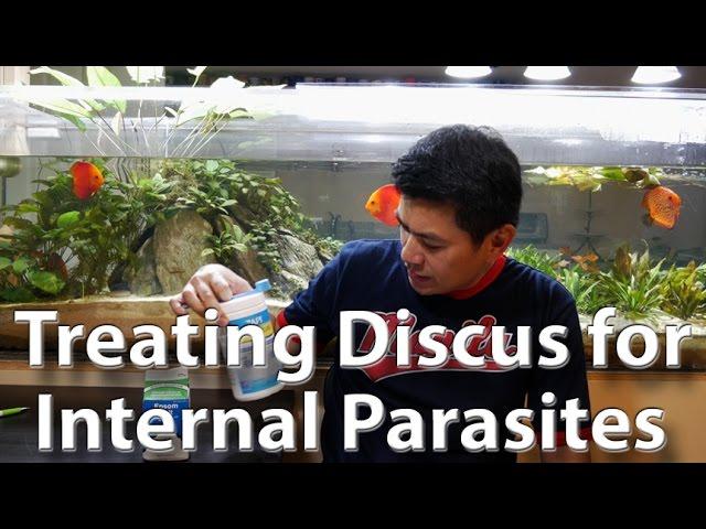 Discus Medication - Internal Parasites