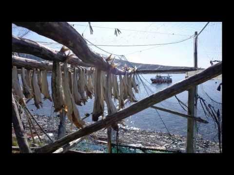 Video di maynkraft di pesca