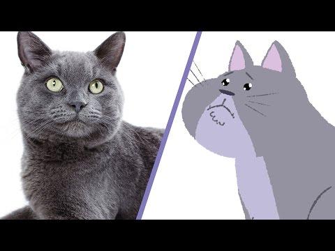 Co si myslí kočky?