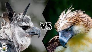 HARPY EAGLE VS PHILIPPINE EAGLE  - Who is the king of the eagles?