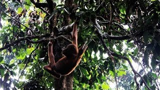 EPIC Journey To Borneo To Find Orangutans