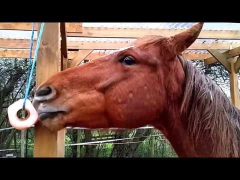 Himalaya Salzleckstein für Pferde