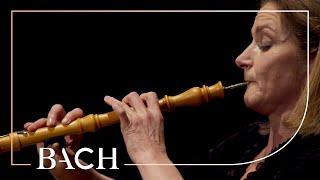 Bach – Oboe Concerto in F major BWV 1053r