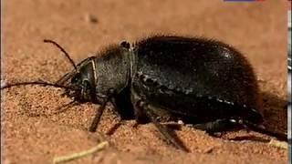 Жизнь в пустыне. Страсти по насекомым.