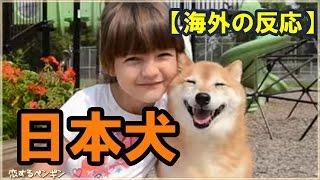 海外の反応世界中で日本犬が大ブーム!「みんな我が家で引き取って一緒に暮らしたい」「お前何でそんなにモフモフしてんだよー!」