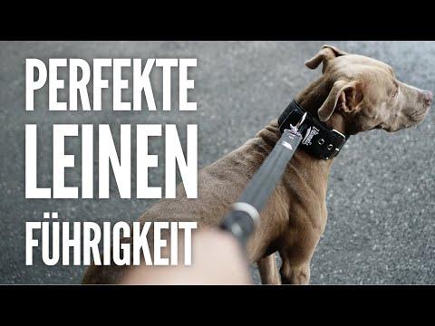 Leinenführigkeit | So zieht dein Hund nie wieder an der Leine | Hundetraining by Vitomalia