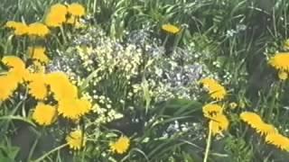 Божий дар Фильм о целебных растениях