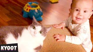 animales  niños y gatos