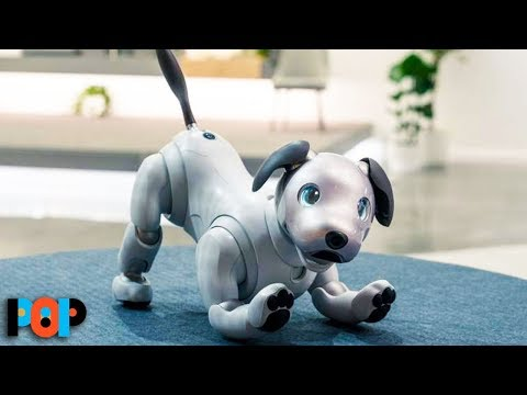 Buy This Robot Dog For Only $3K!