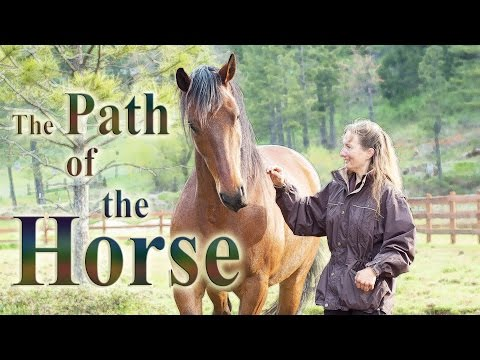 ^® Free Streaming The Path of the Horse