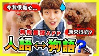 【實測】 「🐶人語、狗語互相翻譯」的手機APP!?真的能溝通?😢 MUFFIN的話令我很傷心…(中字)