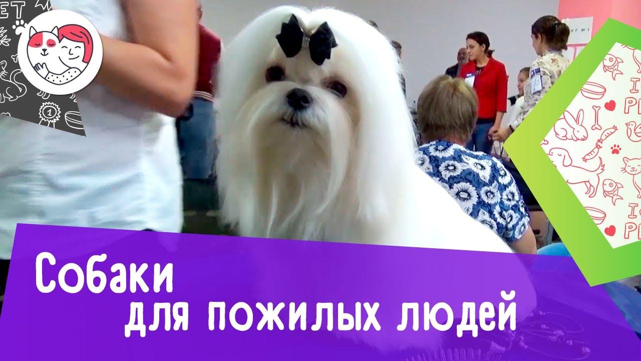 5 пород собак, идеально подходящих для пожилых людей