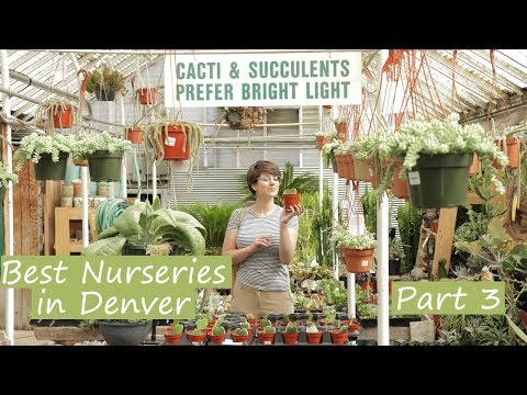 , title : 'TOP 10 Nurseries in Denver    Part 3