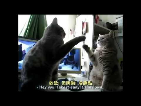 貓咪對話!配音員也太神太有梗了!百看不厭!