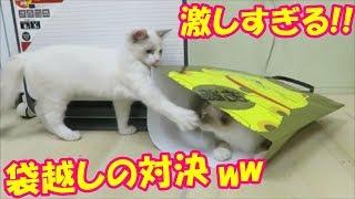 猫袋からの反撃!!可愛いニャンコの袋越しの対決……❤^^♪Animationofmycutekittens.