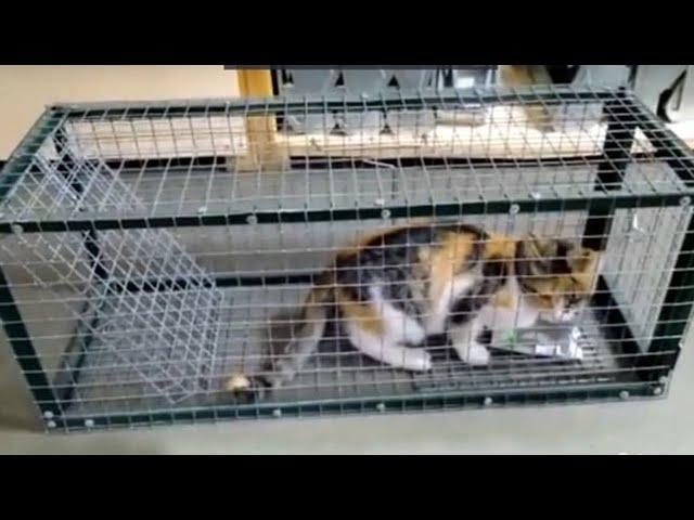 Волонтёры отлавливают бездомных животных