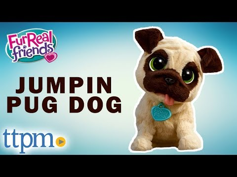 FurReal Friends J.J. My Jumpin Pug Dog - Instructions and Demo | Hasbro Pet Toys