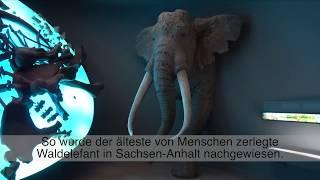 Funde in Sachsen-Anhalt