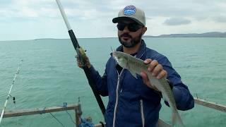 Рыбалка в азербайджане сетами