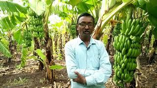 ZBNF Banana Farmer