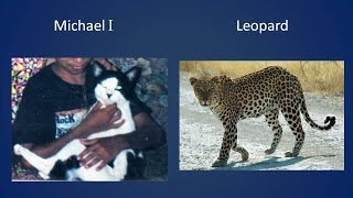 All my cats and their lookalikes
