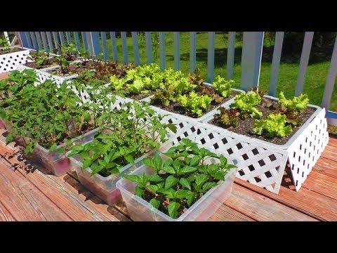 Container GARDEN How to Start Vegetable SEEDS gardening tomato patio deck grow best varieties