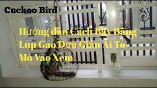 Chim Cu Gáy : Lụp Gáo  Chuyên đánh Bổi Khôn,trận.. Ib Zalo 0375463848