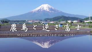 農鳥と逆さ富士 - Mount Fuji reflected on water