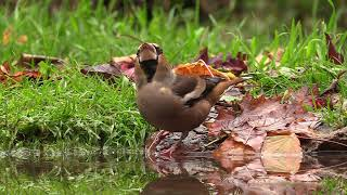 Oiseaux et feuillages d'octobre