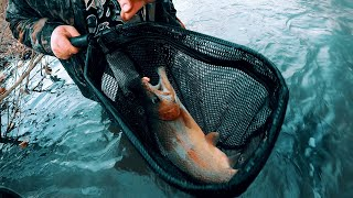 Trout Fishing Virginia's Cripple Creek 2020
