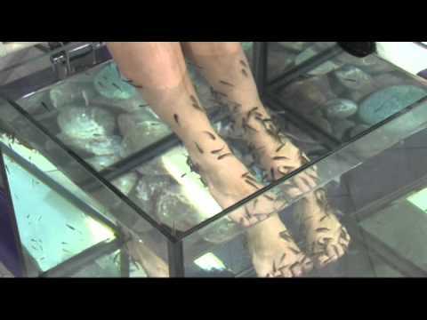 Die Behandlung der Schuppenflechte das ungarische Schema