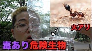 超危険な殺人アリが日本で発見されたので捕獲しに行ってみた!!!!!!!!!!!!!!!!!!!!!!!!!!