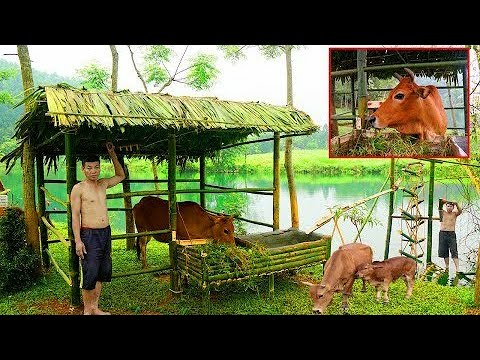 , title : 'Primitive Life Leave the city, avoiding diseases, Build Amazing House For Cows, Green Life Skills