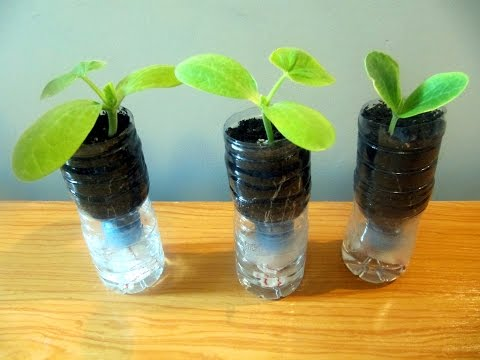 Sistema de macetas autorriego con botellas de plástico -  Self-watering system with plastic bottles