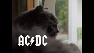 AC DC Cat - Cat sings and moves to T.N.T.