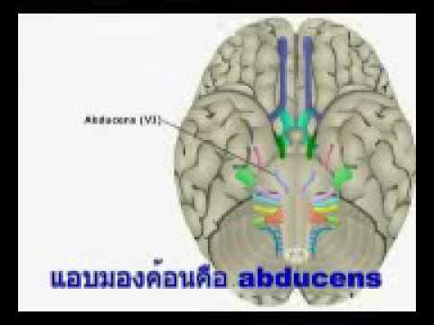 Thrombophlebitis และหายใจถี่