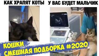 Кошки смешная подборка 2020 видео