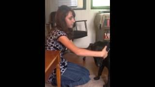 Talita Godinho, Dog Massage Therapist