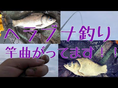 ヘラブナ釣り 底釣り 浮きの調節で釣れる