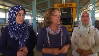 Muşlu besici kadınlara devlet desteği