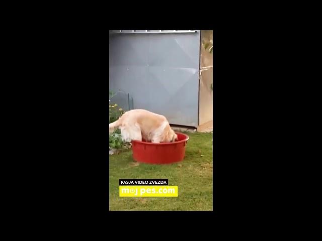 Max – Video natečaj 2020 – Revija Moj Pes #Max #MojPes