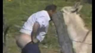 Самые смешные видео про животных, со всего рунета!