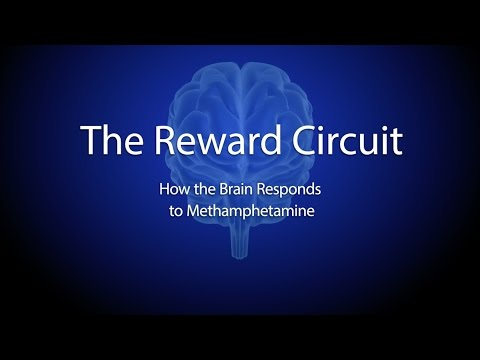 The Reward Circuit: How the Brain Responds to Methamphetamine