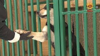 Выставка-ярмарка собак пройдет в эту субботу в Чебоксарах.