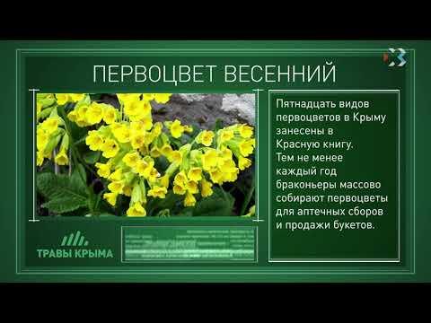 Травы Крыма. Выпуск 64. ПЕРВОЦВЕТ ВЕСЕННИЙ