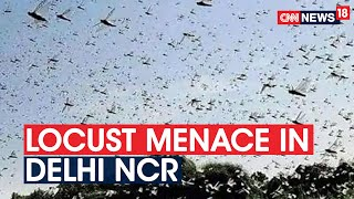 Delhi Govt Issues Advisory To Tackle Locusts As Swarms Of Locusts Reaches Delhi NCR | CNN News18