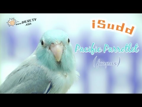 Parasite Eve 3 รีวิว
