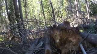 Велопрогулка по лесу 00120. Еду, не знаю куда, ни души кругом.