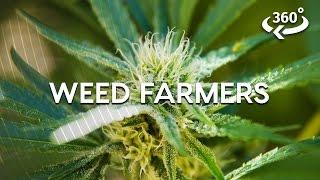 Weed Farming The California Way