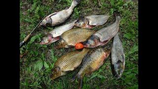 Платные водоемы для рыбалки в ростовской области
